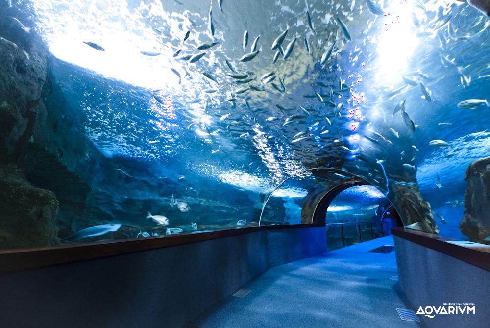 -aquarium-san-sebastian